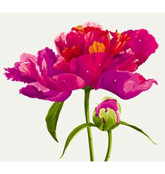luxurious flowers vector image vector image