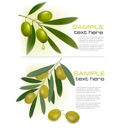 olive branchs vector image vector image