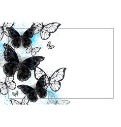 Background with black butterflies vector