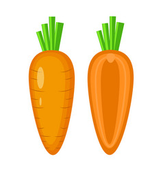 colorful whole and half carrot vector image