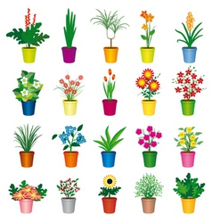 Pot plants vector
