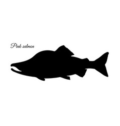 Silhouette of pink humpback salmon vector