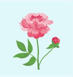 vintage pink peony flower can be used as greeting vector image