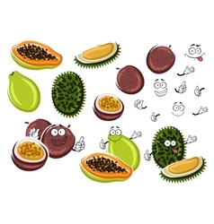 Papaya maracuja and durian fruits vector