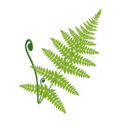 Fern leaf isolated on the white vector