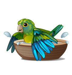 Green parrot bathing in a bowl of water isolated vector