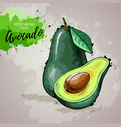 Hand drawing artistic avocado vector