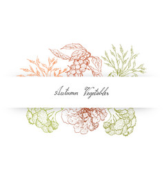 Hand drawn autumn vegetables of brussels sprouts vector
