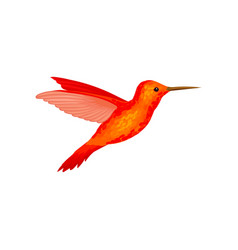 Hummingbird tiny colibri with bright orange vector