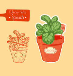 Spinach growing in a pot vector