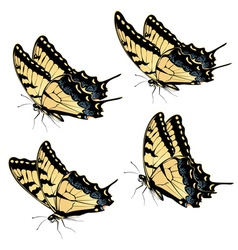 Tiger Swallowtail Butterfly3 vector