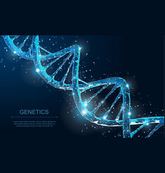 abstract 3d polygonal wireframe dna molecule helix vector image
