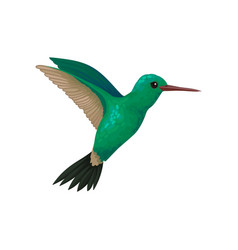 Flying hummingbird tiny colibri with bright vector