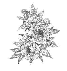 hand drawn floral bunch with peony flowers buds vector image