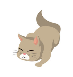 cat animal pet adorable image vector image