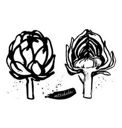 artichokes sketch vector image