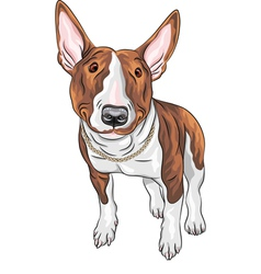 Bull Terrier Dog breed vector image
