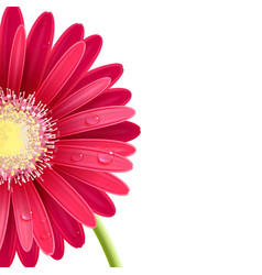 Red gerbera flower vector