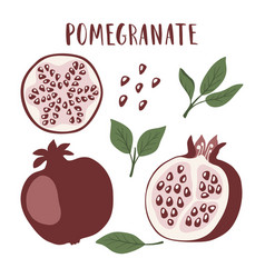 set of whole pomegranate fruit segment vector image