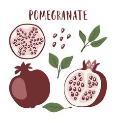 set whole pomegranate fruit segment vector image