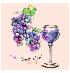 Sketch grapes wine of for design vector