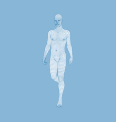 walking man 3d human body model human body wire vector image