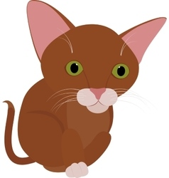 Funny brown cat with big green eyes isolated on vector image vector image
