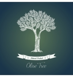 Ancient greek olive oil tree in grove vector image