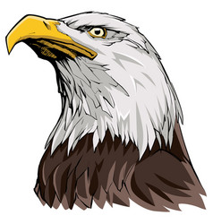 Bald eagle on white vector
