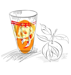 glass of fresh mandarin juice vector image