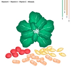 Green Collard with Vitamin K A and C vector image