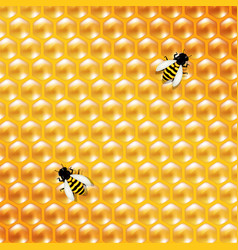 Honey background and bee vector