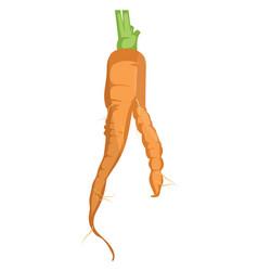orange cartoon carrot of vegetables on white vector image