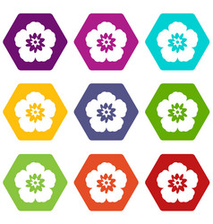 rose of sharon korean flower icon set color vector image