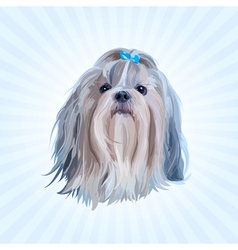 Shih tzu dog portrait vector