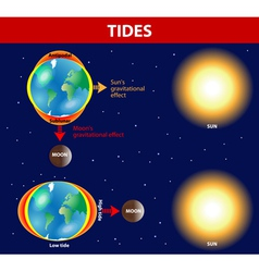 Tides vector image