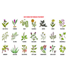 Best natural herbs for psoriasis treatment vector