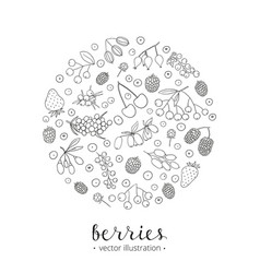Hand drawn berries in circle vector