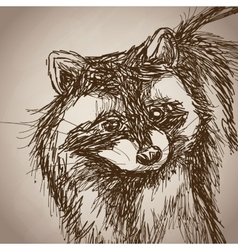 raccoon portrait forest hand drawing vintage vector image