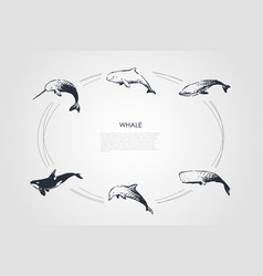 whale - different types - dolphin sperm and vector image
