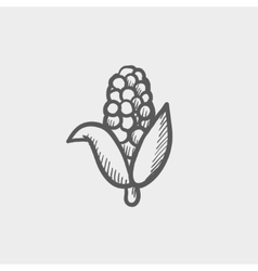 Corn sketch icon vector image