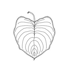 hand drawn leaf jungle tropical leave isolated vector image