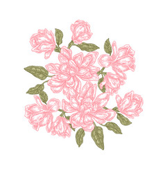 Hand drawn magnolia flowers isolated on white vector