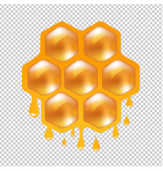 honeycombs with transparent background vector image
