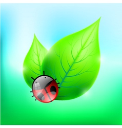 Leaves with Cute Ladybug vector image
