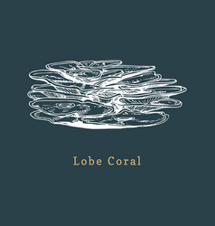 Lobe coral drawing of sea vector