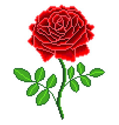 pixel red rose flower detailed isolated vector image