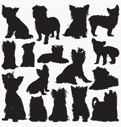 silhouettes yorkshire terrier dog vector image