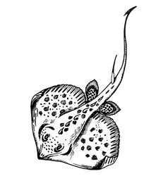 Stingray fish engraving vector