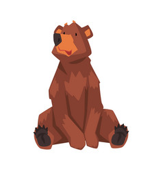 Cute sitting brown bear wild forest animal vector